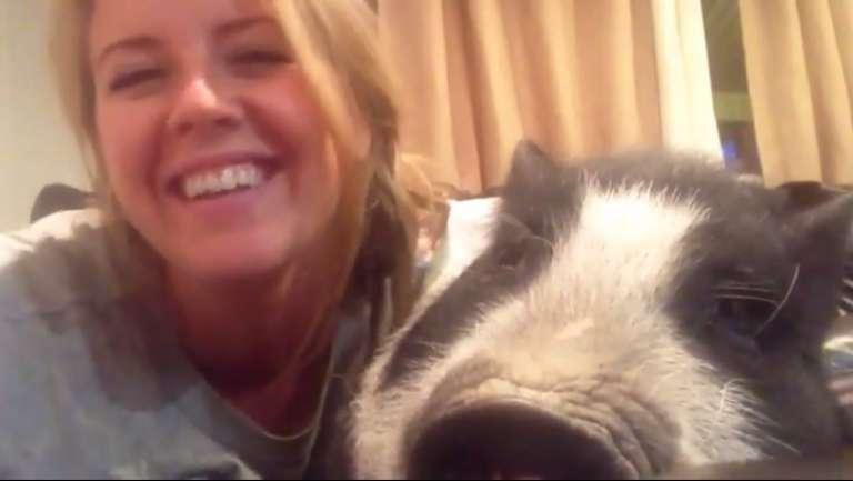 This pig don't feel like cuddling...