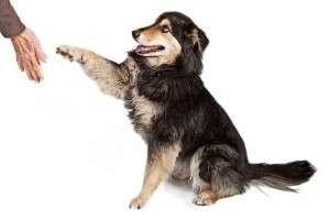 Fun Ways to Teach Your Dog Tricks - Training Practice