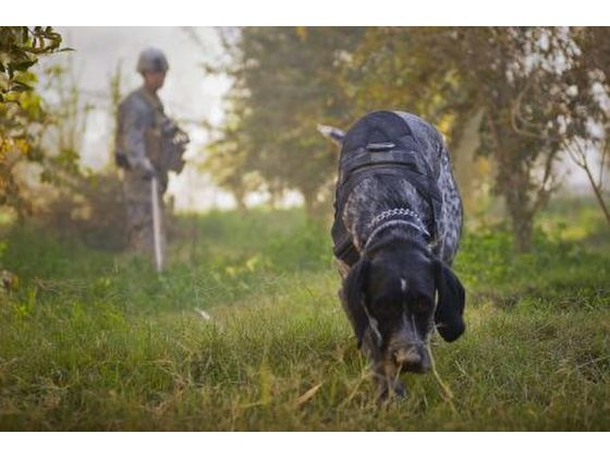 Dog Scent Detection - Useful Extra Skills and Abilities