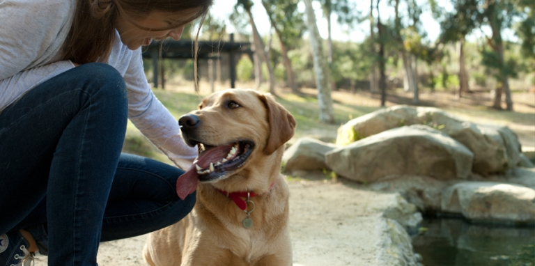 Encourage Your Dog's Abilities - Scent Detection Training