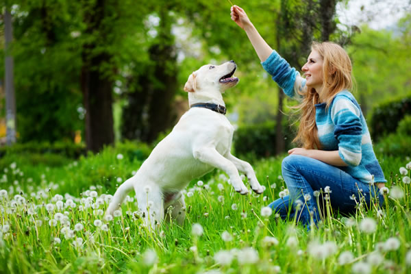 Treat Your Dog to Training – Learning Tricks & Having Fun