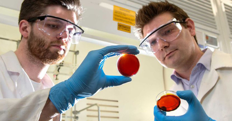 Accidental orange peel discovery could suck deadly mercury out of oceans