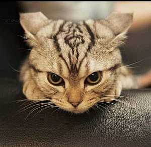 I think the cat is mad! #aww