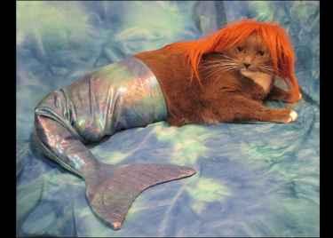 This cat celebrates #halloween as a mermaid... meow!