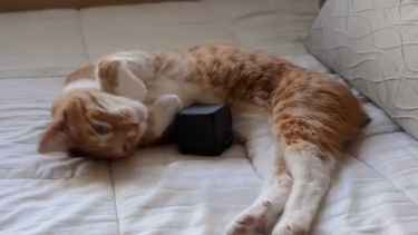 #Kickstarter: Music for #Cats