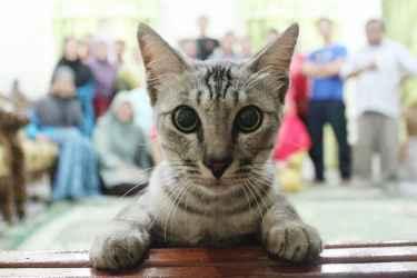 The Cat Photobomber
