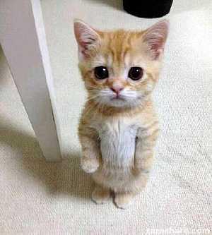 Adorable kitty #aww