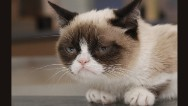 Grumpy Cat's going Hollywood #aww