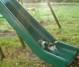 Cat climbing on the slide #Funny_Animals #cats
