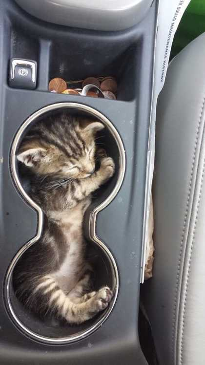 Cat in the cup holder... is the #CutestThingEver!