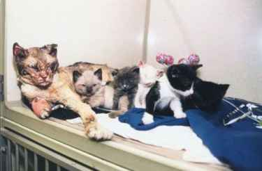 Mother cat burned herself as she rescues her five kittens from Brooklyn fire...