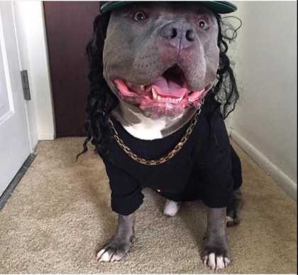 This Dawg Is 'Straight Outta Compton'
