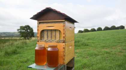 Flow Hive: Now Everyone Can Be A Beekeeper! Watch As Honey Flow From The Hive!