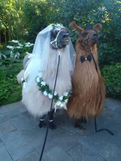 It was a beautiful wedding...