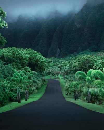 Road Along Ho'omaluhia Botanical Garden in Oahu, #Hawaii