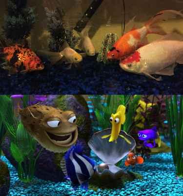 Fishy Meeting