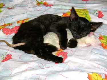 Tom and Jerry got tired...
