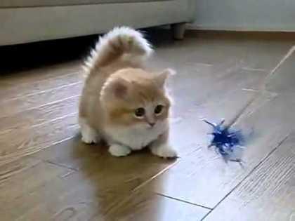 Fluffy Kitten Is #SoFluffy