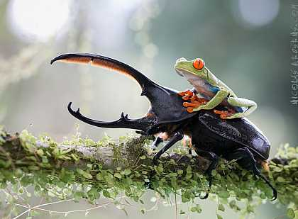 #Photography: #Insects: A Knight And His Loyal Steed