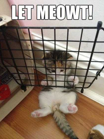 Cats be like... #lol