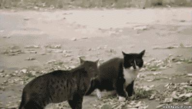 """#Funny: #Cats were fighting and then the dog came and said, """"Woof!"""""""