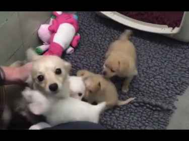 Sad mother dog was finally elated after getting reunited with her puppies 🐶