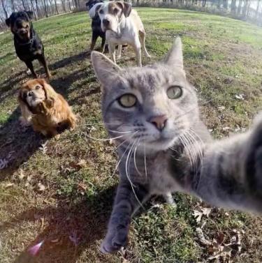 Cats Love Taking #Selfies Too 😾