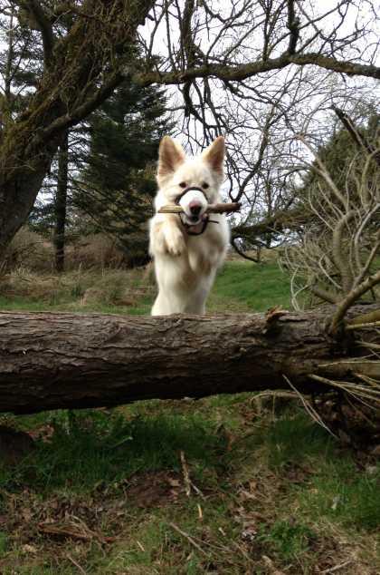 #ActionShot, my puppy <3