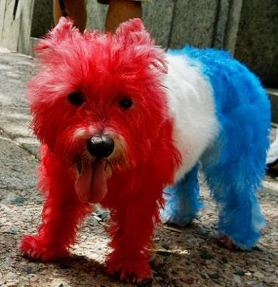 The American Dog | #funny