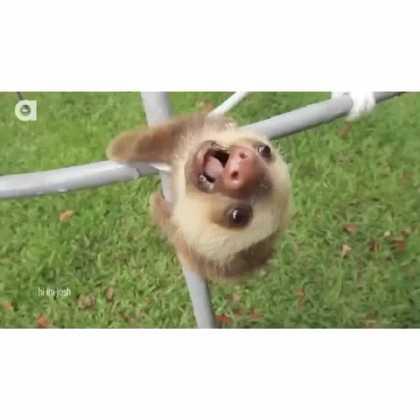 Happy Sloth Friday #FunnyVines #Animals