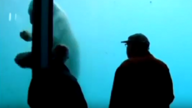 Zoo Polar Bear Throws Rock to Break Aquarium Wall