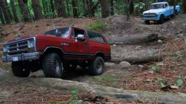 Giant Cat Spotted at the Forrest During Offroading