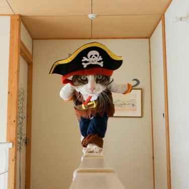 Captain Hook's Cat