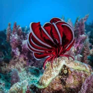 Amazing Feather Starfish