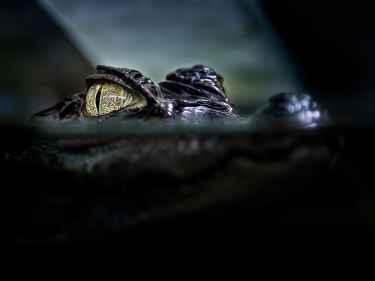 The Crocodile Eye