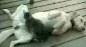 Cat giving dog a shiatsu massage | #funny #cats #dogs