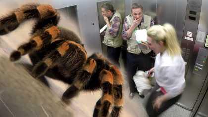 #BestPranks: Elevator Spider Prank