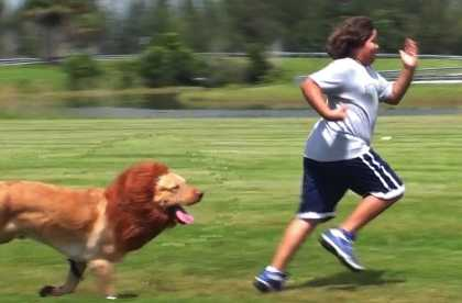 #BestPranks: The Lion Dog