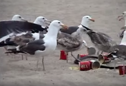 Kids fed seagulls with laxatives... watch the chaos at the park as poop drops everywhere #LOL