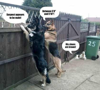 The Neighborhood Watch | #funny #dogs