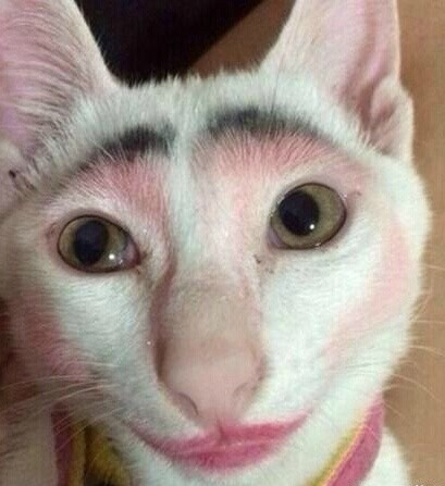 These Pictures Of Cats Wearing Makeup Will Definitely Make Your Facebook Friend Smile