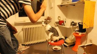 Cat High Five!   #aww #cats