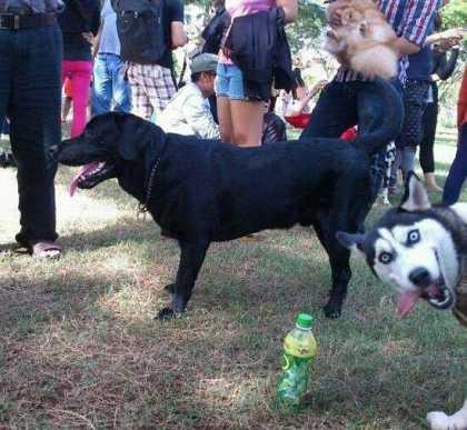 #Funny Husky #Photobomb