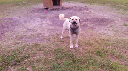 My dog Sparky, loves to smile #Aww