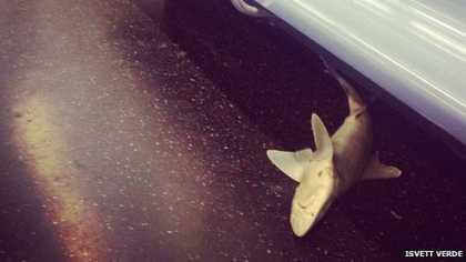#SharkWeek: Shark found on New York subway