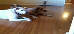 #Funny: Dog's cleaning the house! Get out of the way!