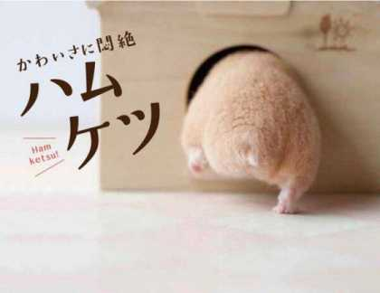 Ham Ketsu: Japan's New Craze Over Hamster Butts