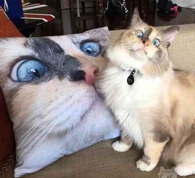 #Cute Cat Face Pillow