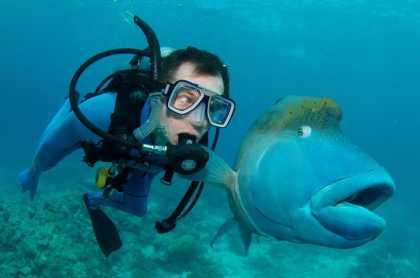 The Socially #Akward #Fish