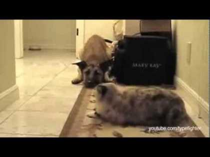 These #cats won't let the #dogs pass... very funny!